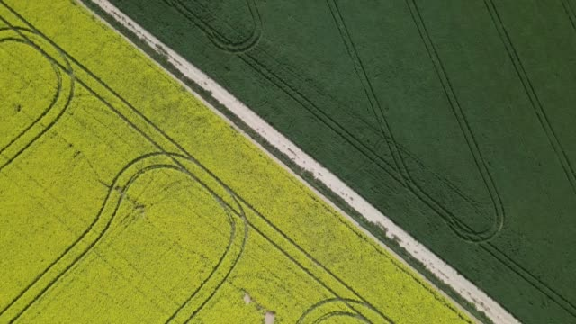 vidéos et rushes de in an aerial view from a drone, vast canola fields grow before harvest on september 30, 2020 in harden, australia. farmers in nsw are enjoying a... - crucifers