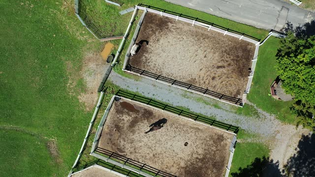 in an aerial view, horses walk in their corral at the thomas school of horsemanship summer day camp & riding school on september 2, 2021 in melville,... - one animal stock videos & royalty-free footage