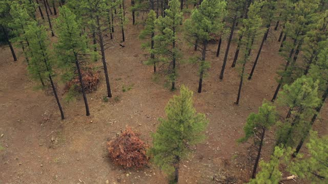 in an aerial view, piles of cut pine trees from a forest-thinning project to reduce vegetation that could burn during a wildfire are seen among... - forest stock videos & royalty-free footage