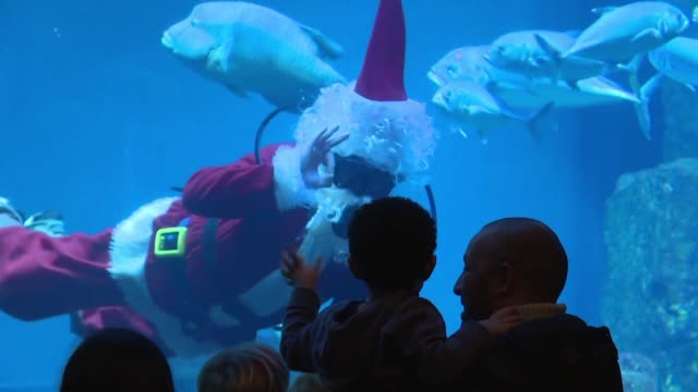 In an annual Paris Aquarium tradition Santa Claus takes a dip in the shark tank