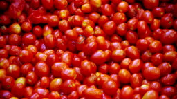 In an industry tomatoes, red tomatoes pass into tanks filled with water to be washed from earth and debris and exit perfectly clean.