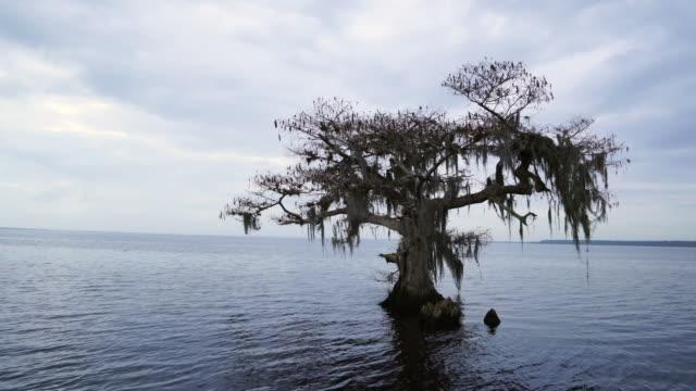 vídeos y material grabado en eventos de stock de bald cypress in blue cypress lake, florida, usa, america - perspectiva desde una barca