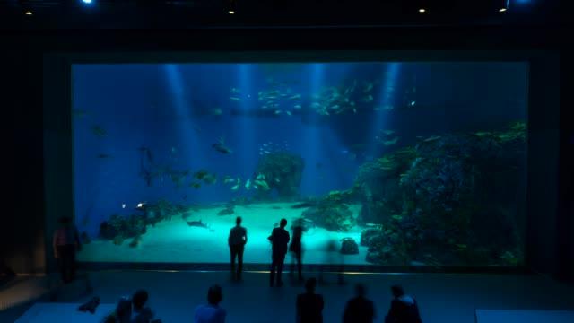 t/l in den ba planet aquarium - aquarium stock videos and b-roll footage