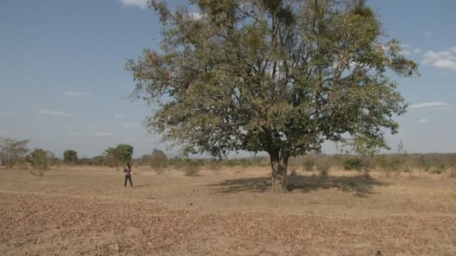 stockvideo's en b-roll-footage met in eastern zimbabwe's parched buhera district omega kufakunesu's family has been forced to scale down daily meals to just a portion of vegetables and... - hongerig
