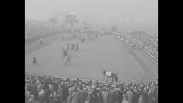 in foggy weather racehorses jump over fence during steeplechase crowd watching / view through fog of racecourse and stands / queen elizabeth ii... - cheltenham racecourse stock videos and b-roll footage