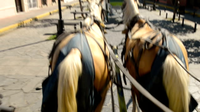 in horse carriage in granada - cart stock videos & royalty-free footage