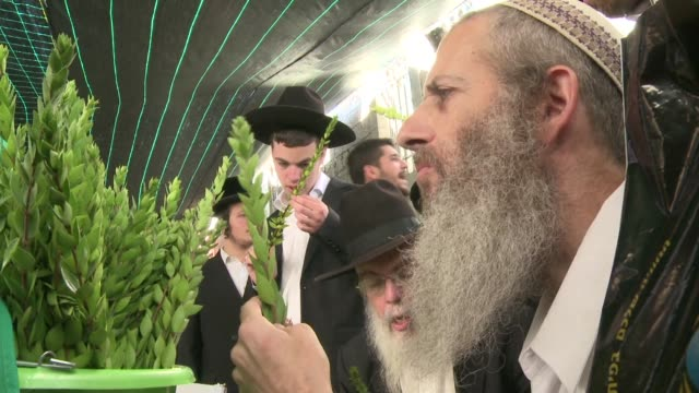 in jerusalem israeli jews prepare for sukkot the feast of tabernacles by carefully selecting four plant species palm leave stalk citrus myrtle and... - israelite stock videos & royalty-free footage