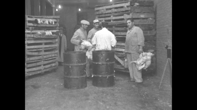 vídeos de stock e filmes b-roll de in large room in slaughterhouse four men stand behind two barrels between stacks of chicken cages one men holding chickens by legs one man in smock... - decapitado