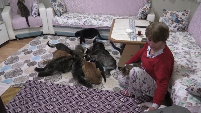 in northeastern turkey, a woman has established a kind of menagerie centered around her house, one devoted solely to the care and feeding of dozens... - human arm stock videos & royalty-free footage