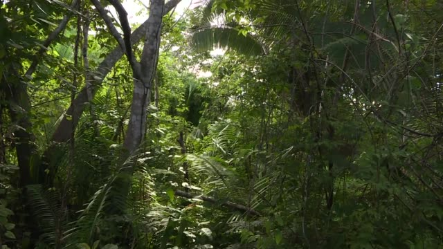 vídeos de stock, filmes e b-roll de in northern para state around 200 indigenous arara people live in the brazilian amazon a four hour boat ride from the nearest city altamira - amazonas state brazil