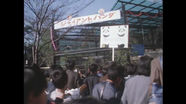 in october 1972 at ueno zoo a long waiting line of visitors continued for seeing giant panda exhibited first time in japan - パンダ点の映像素材/bロール