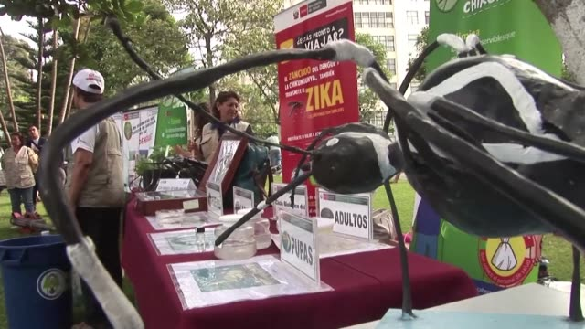 In Peru the Ministry of Public Health launched a campaign to combat the Aedes aegypti mosquito a carrier for the Zika Dengue and Chikungunya viruses