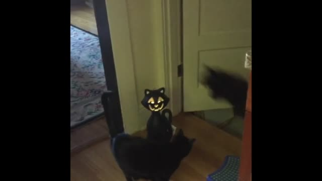 in preparation for halloween, leapfrog the cat gets into the spirit! so cool! - leapfrog stock videos & royalty-free footage
