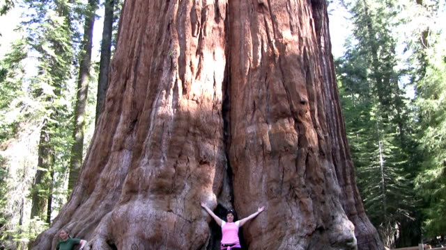 hd: in sequoia national park - giant sequoia stock videos and b-roll footage