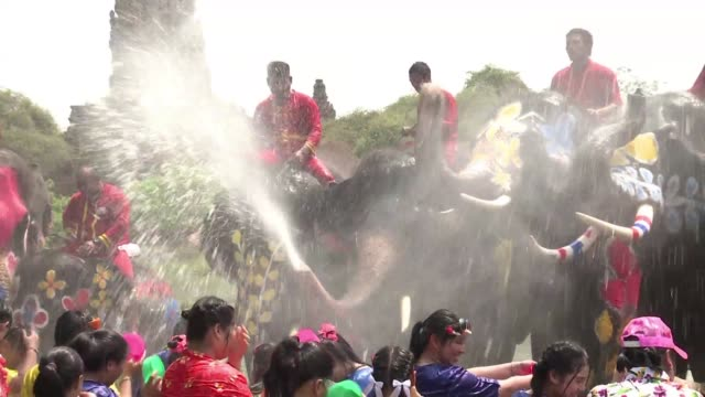 in the ancient thai capital ayutthaya a dozen elephants spray water on revellers to celebrate songkran festival - dozen stock videos & royalty-free footage
