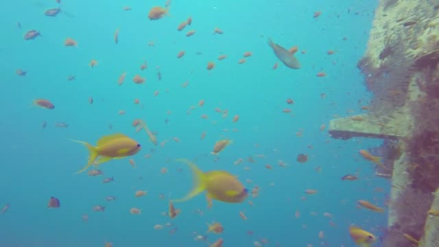 In the azure waters of the Red Sea a team dives to study what may be the planet's most unique coral one that can survive global warming at least for...