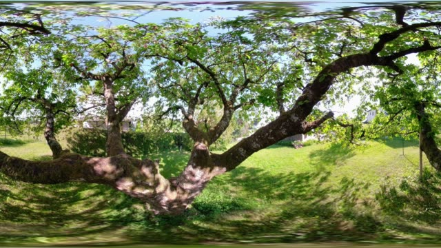 360 vr / in the cherry tree - 360 stock videos & royalty-free footage