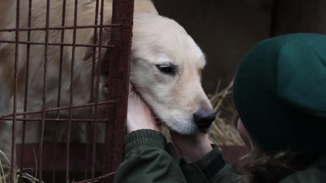 In the face of falling demand dog meat farmer Kim YoungHwan agrees to close his establishment in exchange for compensation from US based Humane...