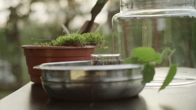 DIY in the garden. Preparing containers and plants for the project