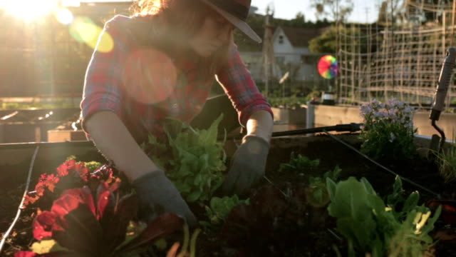 in the garden - vegetable garden stock videos and b-roll footage