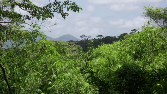 in the heart of the amazonian park of french guyana saul is one of those villages of the green lung of france - french overseas territory stock videos & royalty-free footage