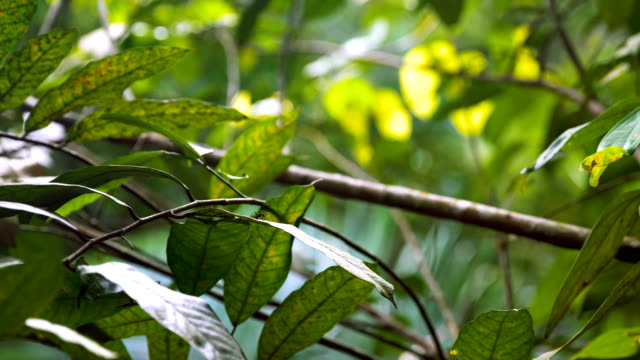 in the jungle. ant walking on a leaf - named wilderness area stock videos & royalty-free footage