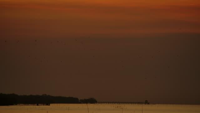 4k 朝、ビーチでの日の出、多くのカモメが飛びました。 - カモメ科点の映像素材/bロール