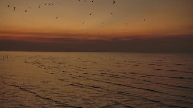 4k 朝、ビーチでの日の出、多くのカモメが飛びました。 - seagull点の映像素材/bロール