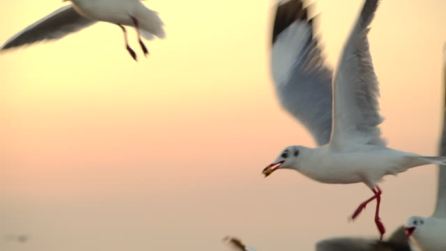 4k in the morning, the sunrise on the beach, many seagulls flew. - water bird stock videos & royalty-free footage