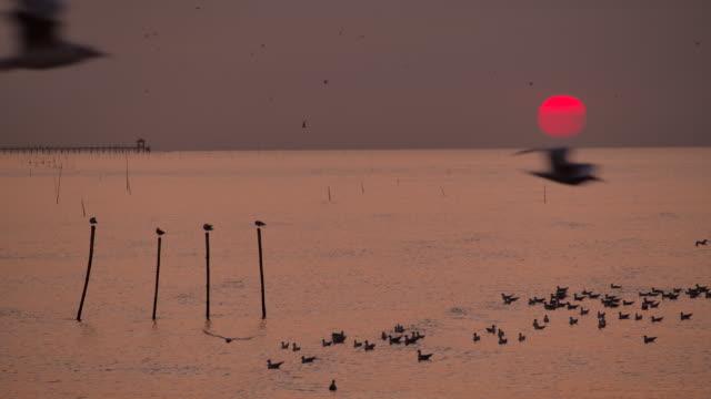 vídeos de stock, filmes e b-roll de 4k pela manhã, o nascer do sol na praia, muitas gaivotas voaram. - atividade móvel