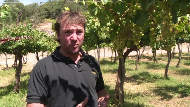 in the salta region in northern argentina is a wine that is produced virtually nowhere else torrontes - afp stock videos & royalty-free footage
