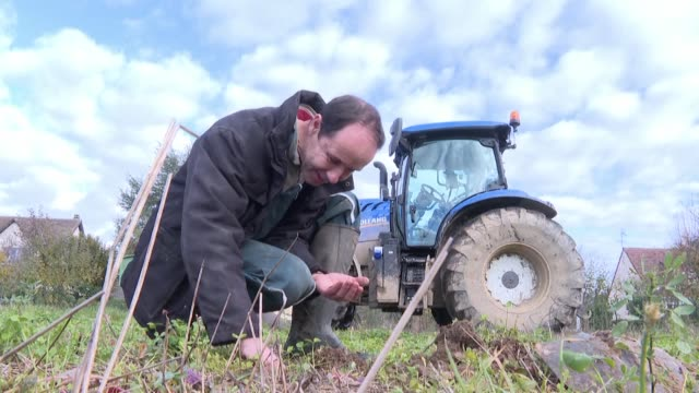 in the spring the neighbours of farmer olivier coupery launched a petition against him over concerns about the pesticides he uses on his fields - pests stock videos & royalty-free footage