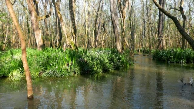 vídeos de stock e filmes b-roll de in the swamp - lamaçal