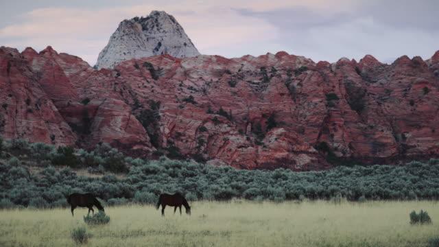 ユタ州ザイオン国立公園に - ザイオン国立公園点の映像素材/bロール