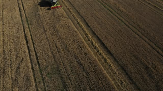 in this aerial view from a drone a combine harvester harvests triticale, a hybrid plant derived from wheat and rye used for animal feed, on july 23,... - crop stock videos & royalty-free footage