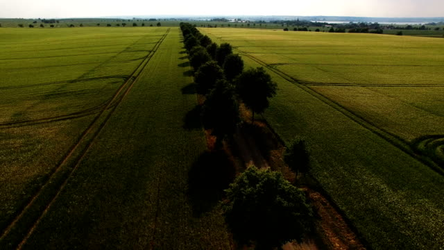 in this aerial view rye grows on a dry farmer's field next to trees that line a dirt road on may 31, 2018 near prenzlau, germany. farmers in northern... - brandenburg state stock videos & royalty-free footage