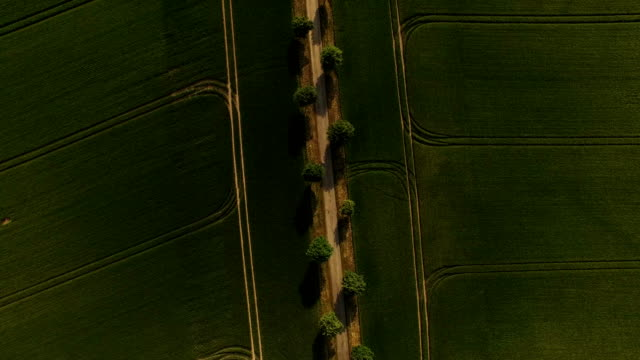 In this aerial view rye grows on a dry farmer's field next to trees that line a dirt road on May 31 2018 near Prenzlau Germany Farmers in northern...