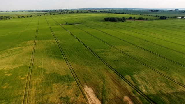 in this aerial view rye grows on a dry farmer's field on may 31, 2018 near prenzlau, germany. farmers in northern germany are anticipating... - brandenburg state stock videos & royalty-free footage