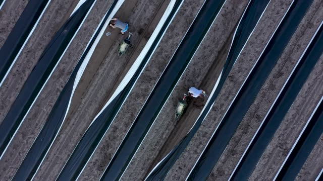 In this aerial view seasonal workers from Poland harvest white asparagus at an asparagus field on April 08 2019 near Beelitz Germany The Beelitz...