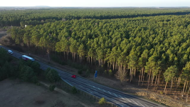 in this aerial view trees stand on the forest property where us automaker tesla is to build a new gigafactory on january 21, 2020 near gruenheide,... - brandenburg state stock videos & royalty-free footage