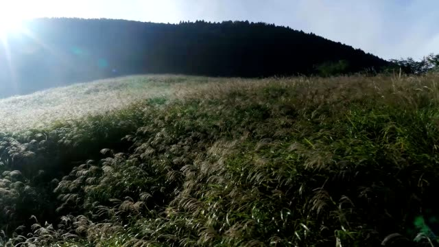 In this footage taken by drone silver grass field are seen at Sengokuhara on November 2 2018 in Hakone Kanagawa Japan