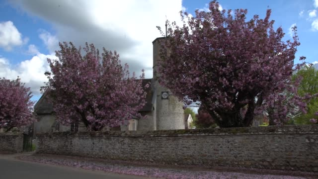 in village with flint walls wisteria and cherry blossom trees on a beautiful summer's day the church st mary's features a round tower - blossom stock videos & royalty-free footage