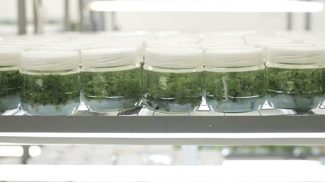 in-vitro-pflanzen im labor. - künstliche befruchtung medizinischer vorgang stock-videos und b-roll-filmmaterial