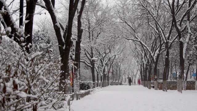 冬には、雪公園のます。 - winter点の映像素材/bロール