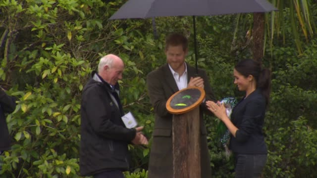 vidéos et rushes de including the royal couple unveiling carol whaley native bush plaque during ceremony marking dedication of 20 hectare section of protected forest on... - canopy tour