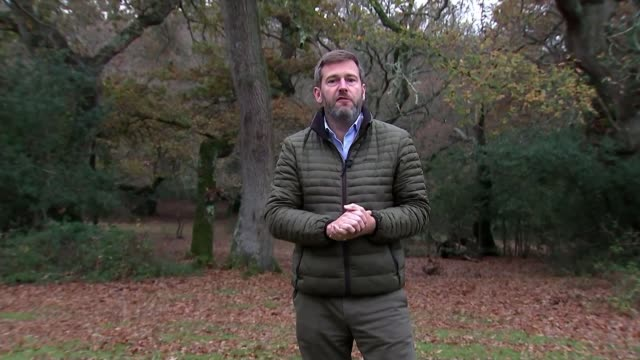 increase in people foraging for food leads to loss of rare mushrooms england hampshire new forest ext dr tim wilkins interview sot tree reporter to... - new forest stock videos and b-roll footage