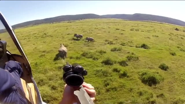 increase in rhinoceros poaching south africa kariega game reserve ext team of vets in helicopter following herd of rhinoceroses across plain point of... - 鎮静薬点の映像素材/bロール