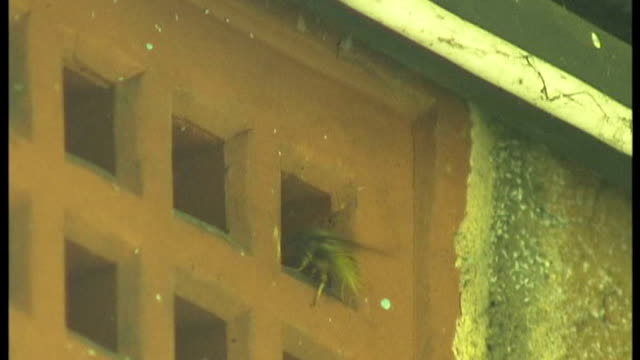 increase of wasps in london t04090751 / wasps in and out of grating in building wasps in and out of entrance to nest in eaves of house - eaves stock videos and b-roll footage