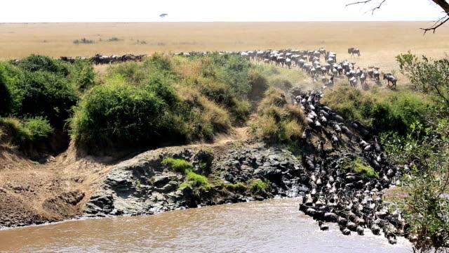 素晴らしい戦いのためのサバイバル-素晴らしいヌー移行のケニア