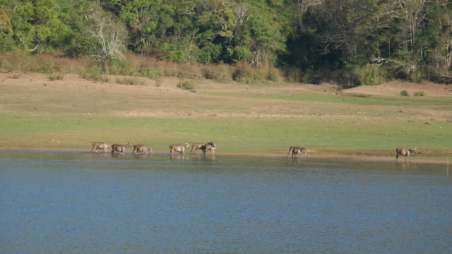 india, kerala, periyar national park (periyar tiger reserve) - wildlife reserve stock videos & royalty-free footage